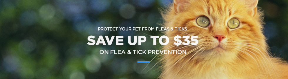 Flea Preventatives
