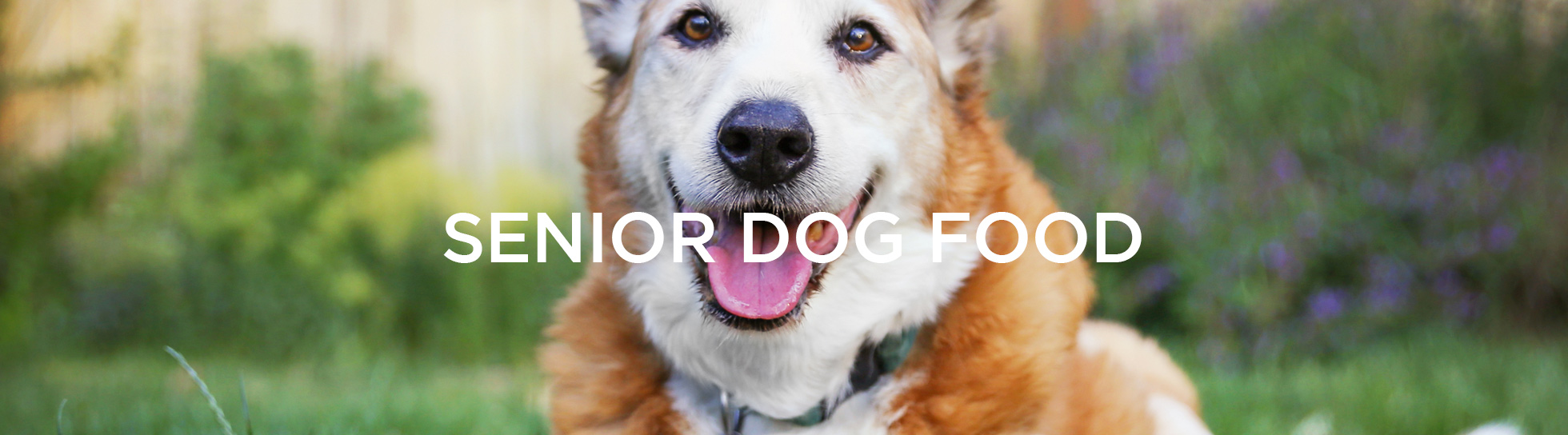 Senior Pet Food
