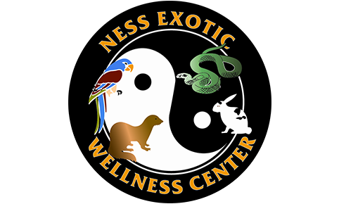 Ness Exotic Wellness Center