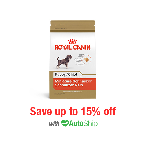 Royal Canin Breed Health Nutrition Miniature Schnauzer Puppy Dry