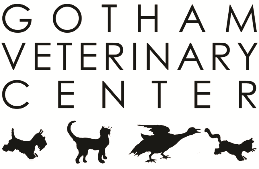 Gotham Veterinary Center