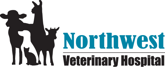 Northwest Veterinary Hospital