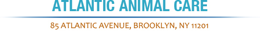 Atlantic Animal Care