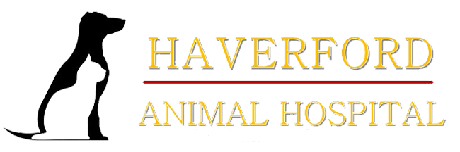 Haverford Animal Hospital