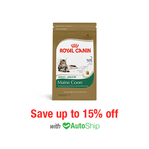 Royal Canin Feline Breed Nutrition Adult Maine Coon Dry